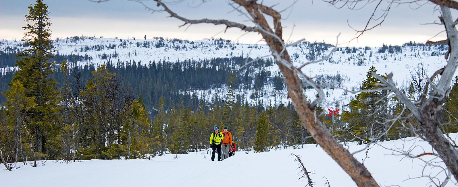 En Heldagstur På Skidor Runt Välliste. En Fjällupplevelse I Världsklass I Södra Årefjällen.