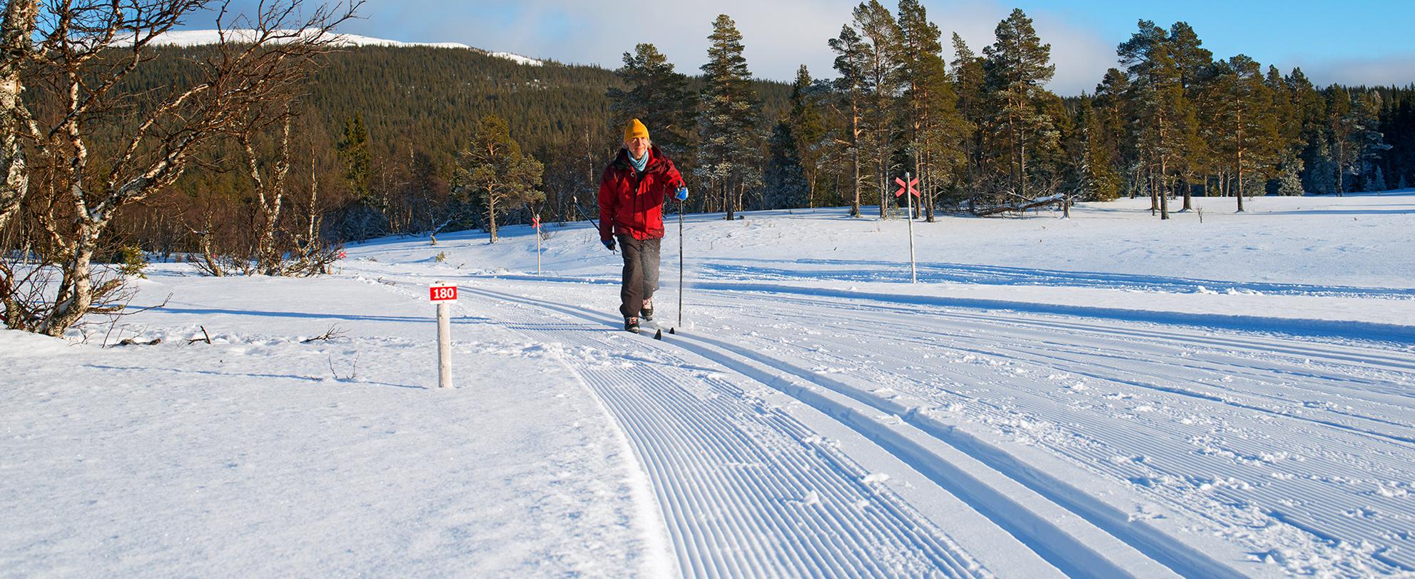 Våffelturen Går I Skogsterräng Och Delvis I Vålådalens Naturreservat. En Fjällupplevelse I Världsklass I Södra Årefjällen.