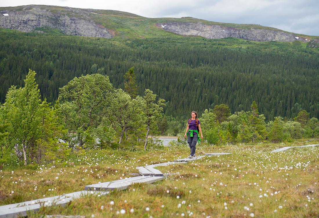 Fäbodrundturen Vid Bottenvallen Och Längs Ottsjön är En Fjällupplevelse I Världsklass I Södra Årefjällen.