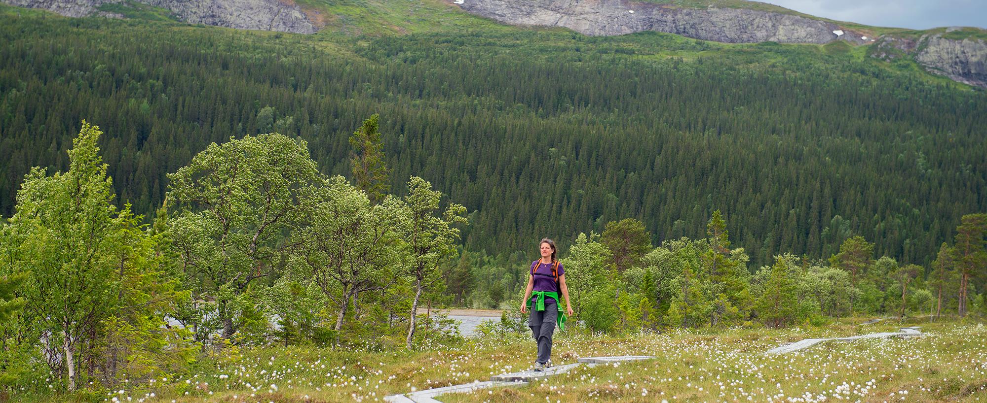 Fäbodrundturen Vid Bottenvallen Och Längs Ottsjön är En Fjällupplevelse I Världsklassi Södra Årefjällen.